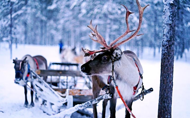 Renne Di Babbo Natale Nomi.Giochiamo Con Le Renne Di Babbo Natale Sottocoperta Net