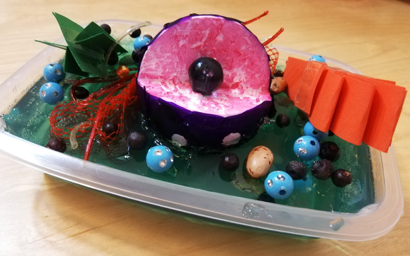 Come realizzare il diorama di una cellula animale e vegetale